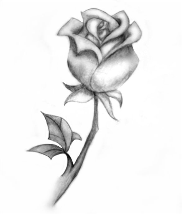 Drawn rose sketching Rose Free & Templates Drawing