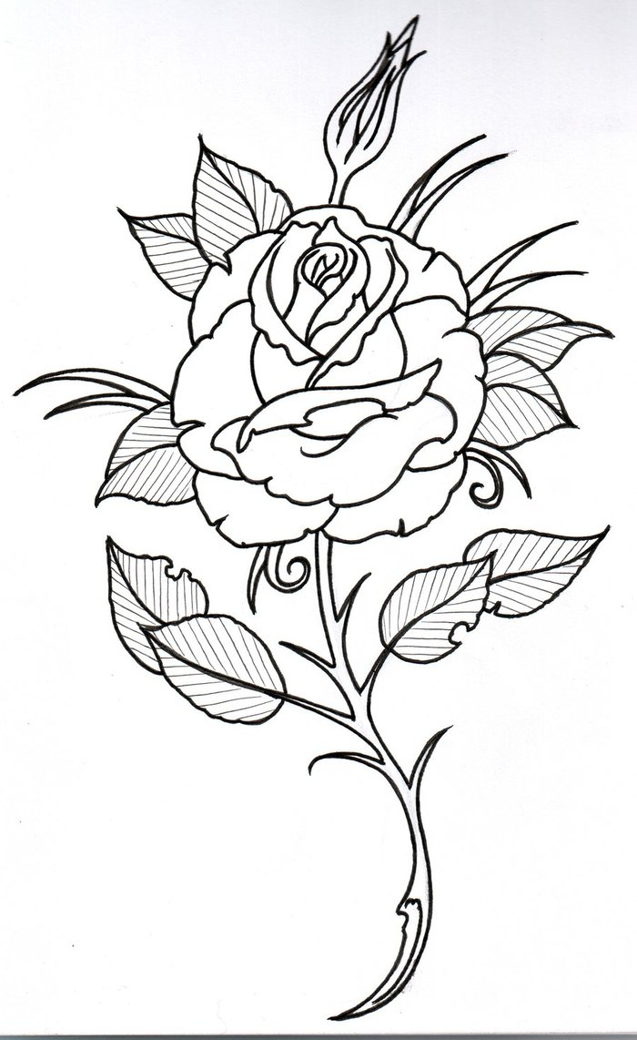 Drawn rose stem outline Easy Art  Clipart Outline