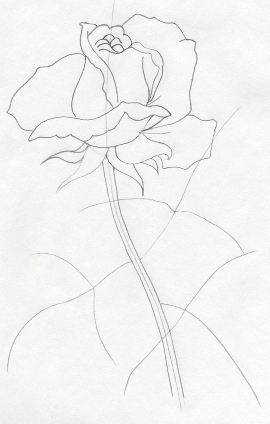 Drawn rose stem outline How a Easily Simply And