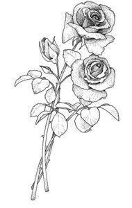 Drawn rose stem outline ::ARTESANATO Outline Flower Pinterest para