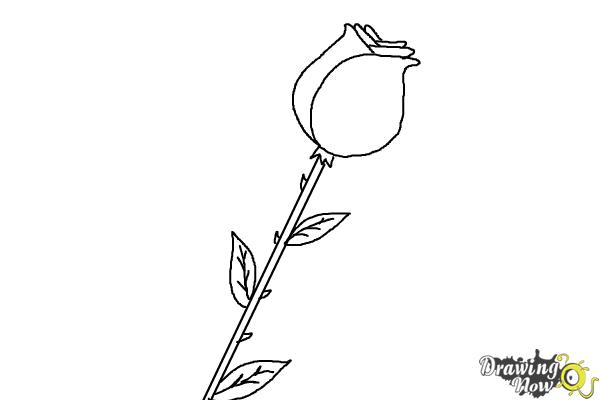Drawn rose stem outline Step the draw a and