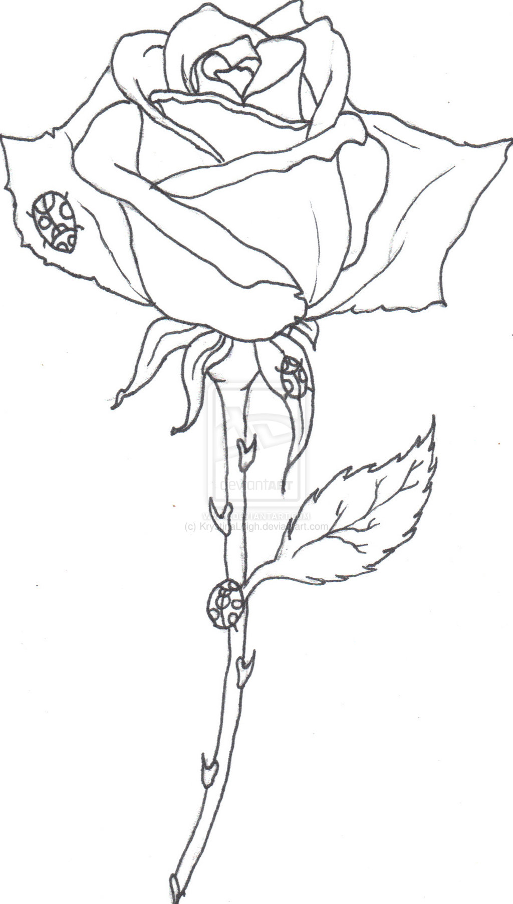 Drawn rose stem outline Images drawings  Images Line