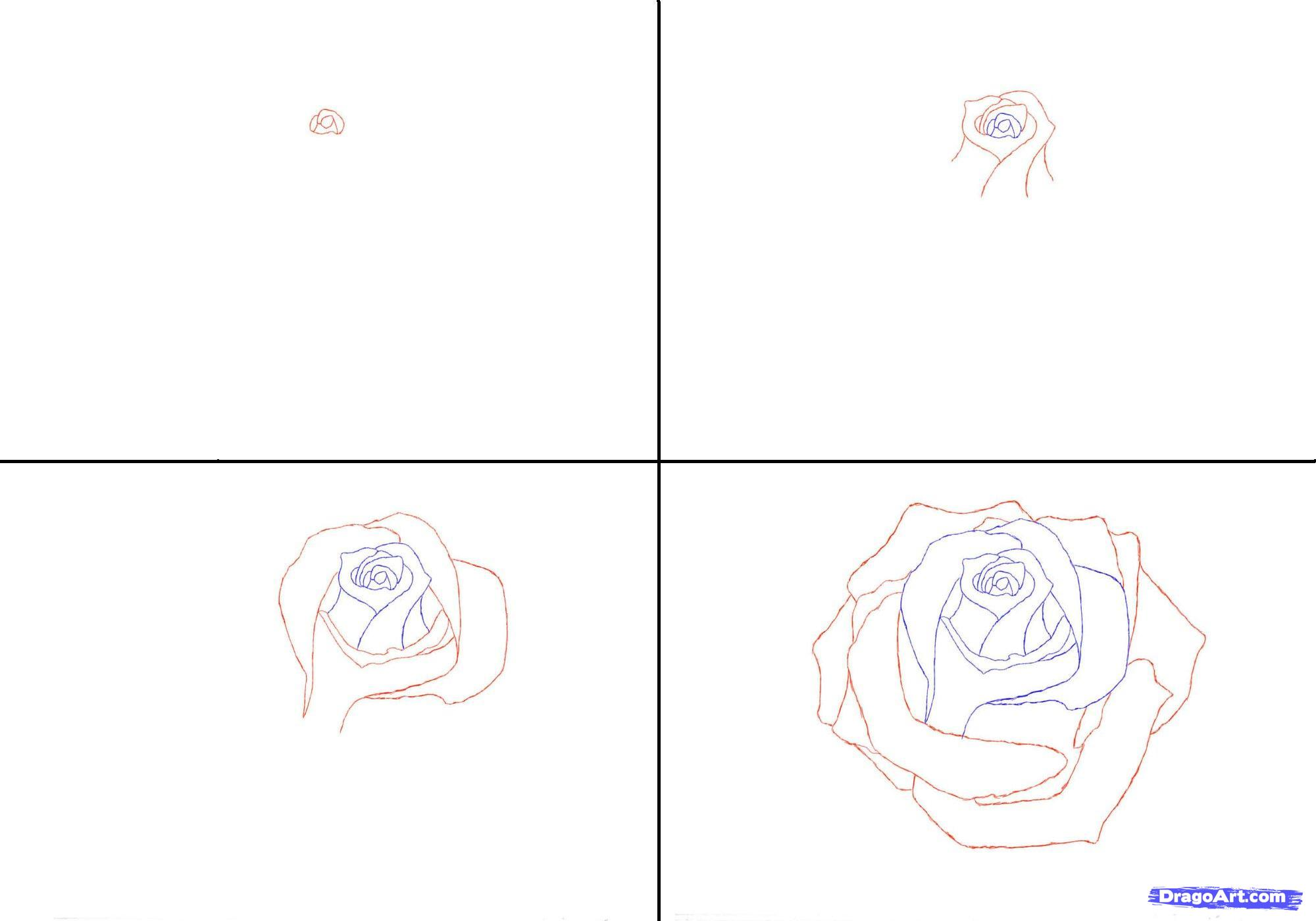 Drawn rose step by step Rose in 1 rose to