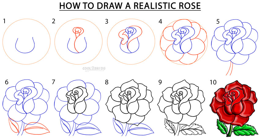 Drawn rose step by step To Rose a Realistic Rose