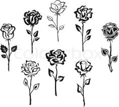 Drawn rose tiny rose  Vector rose on flowers'