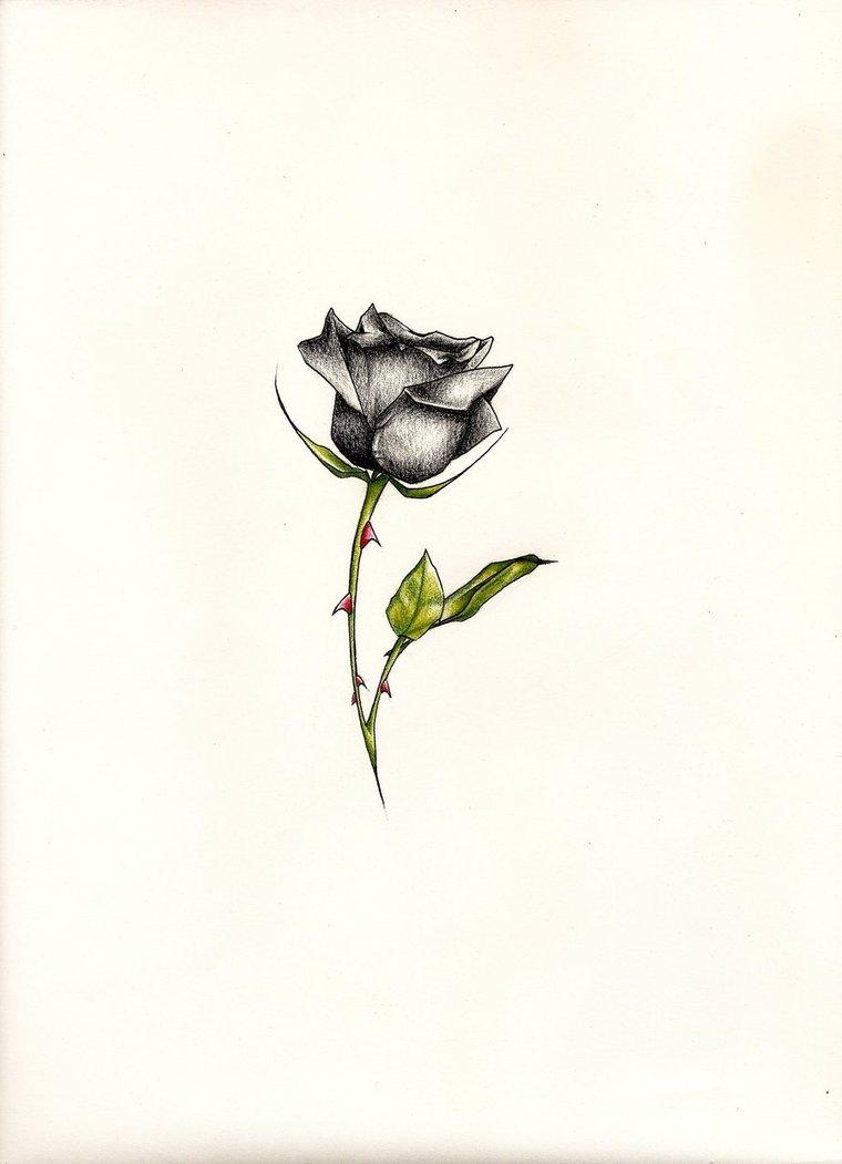 Drawn rose tiny rose By *JohnVichlenski Tattoos on