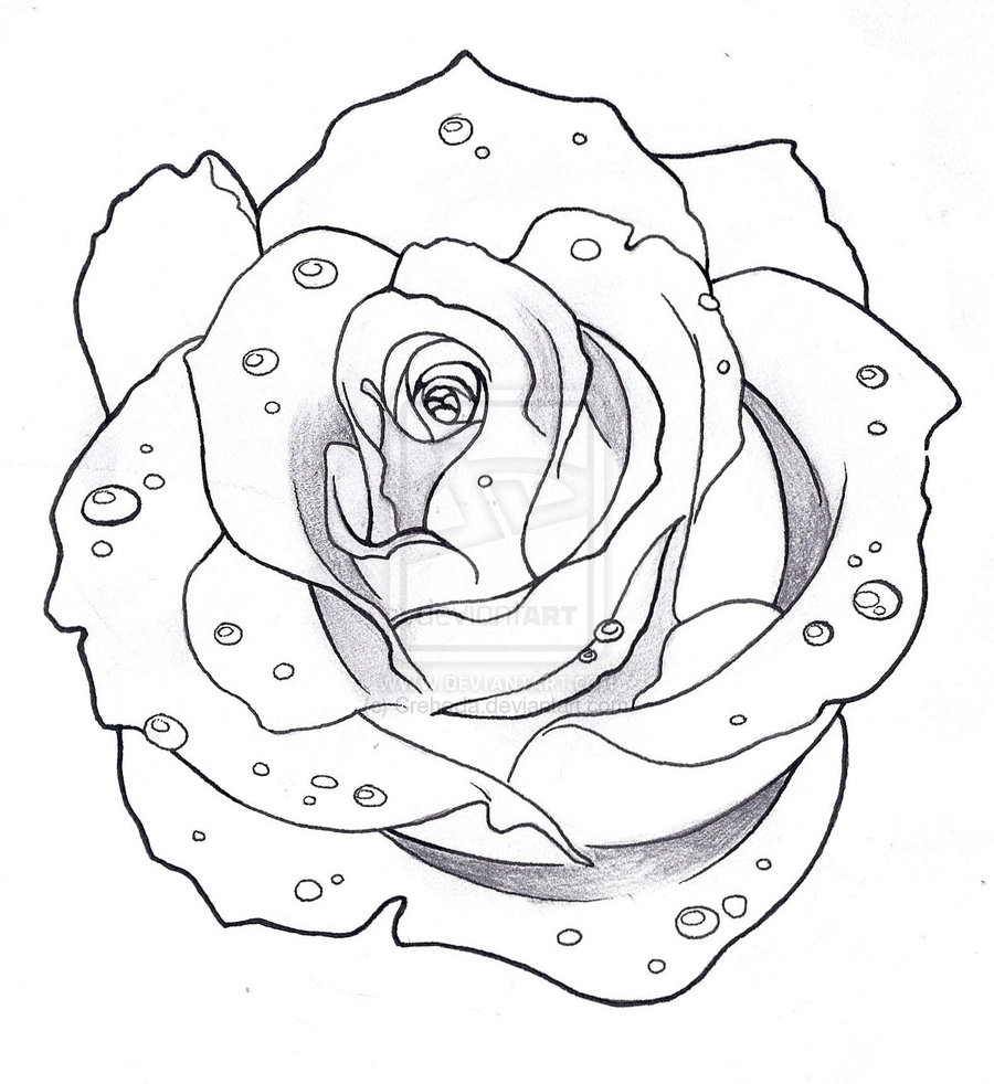 Drawn rose top Skull Photos And Dark Rose