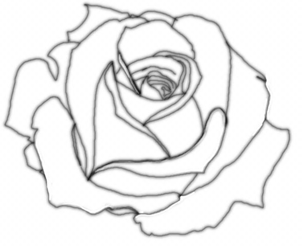 Drawn rose top Outline Values Rose outline and