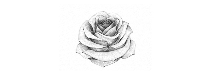 Drawn rose top Product How Final a Rose