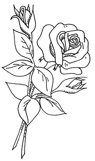 Drawn rose two Only love via 2 wd
