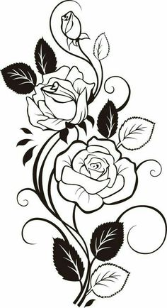 Drawn rose two How a by from gulab