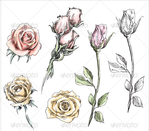 Drawn rose vintage Of by Roses Nature Flowers