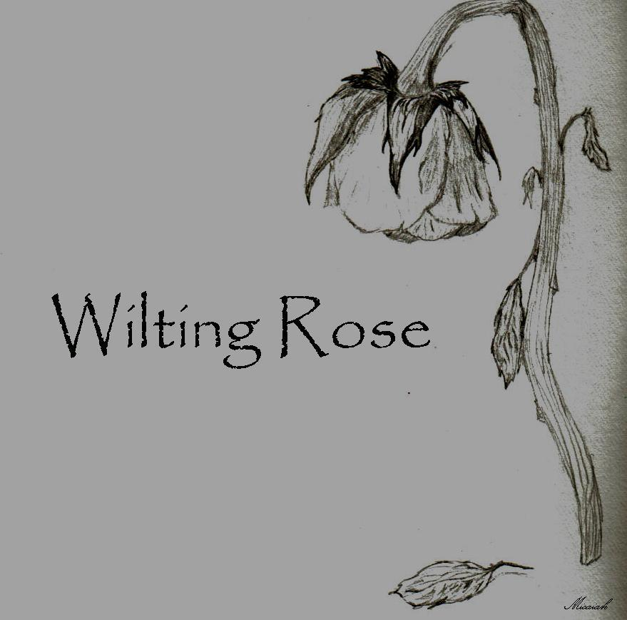 Drawn rose bush wilted flower Deviantart com @DeviantArt on Wilting