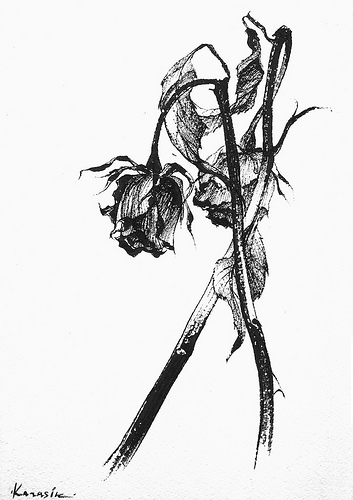 Drawn rose wilted Black white Google white for