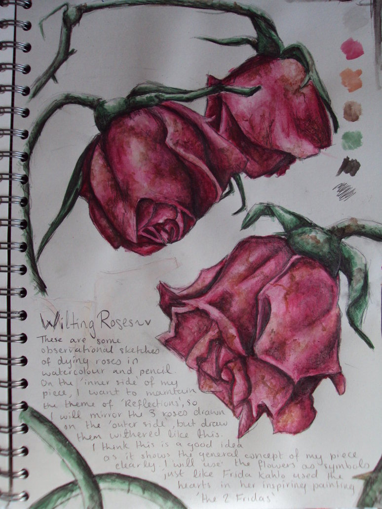 Drawn rose bush wilted flower Ai x Roses Wilting Wilting
