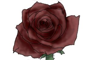 Drawn rose wilted Dw993 by rose DrawingNow Drawing