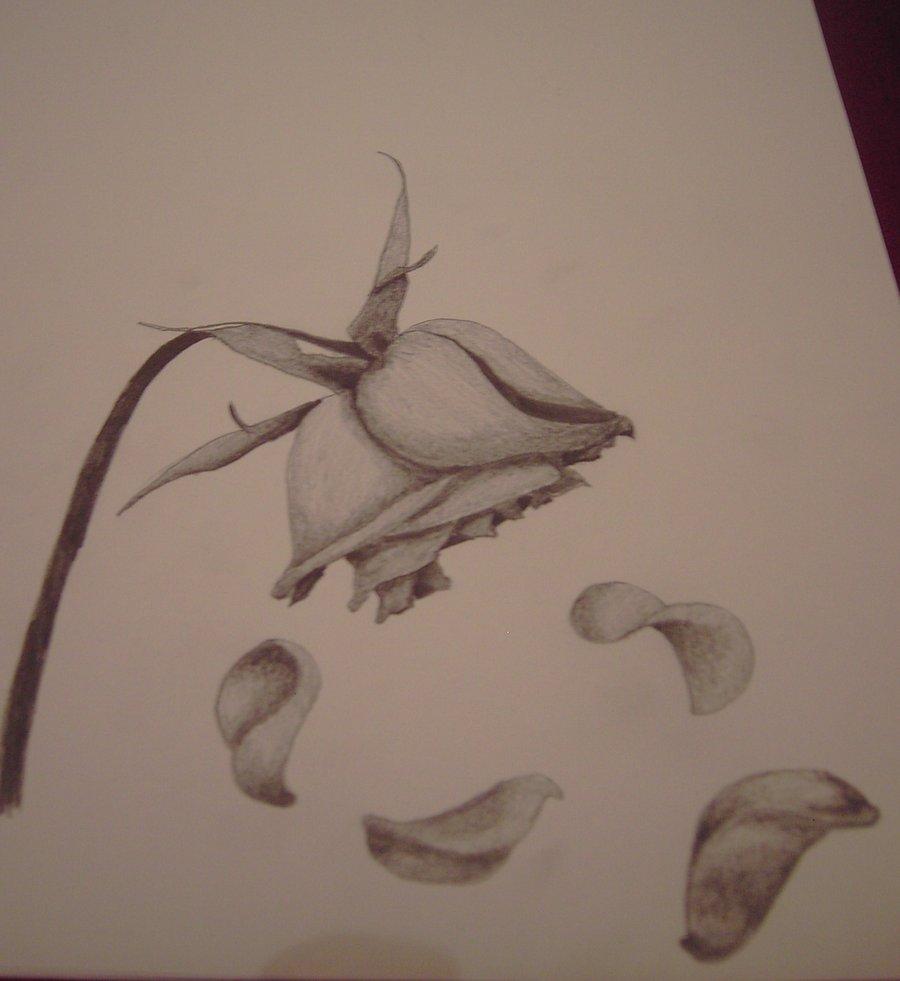 Drawn rose wilted Rose BeautifulDirtyFitch rose wilted DeviantArt