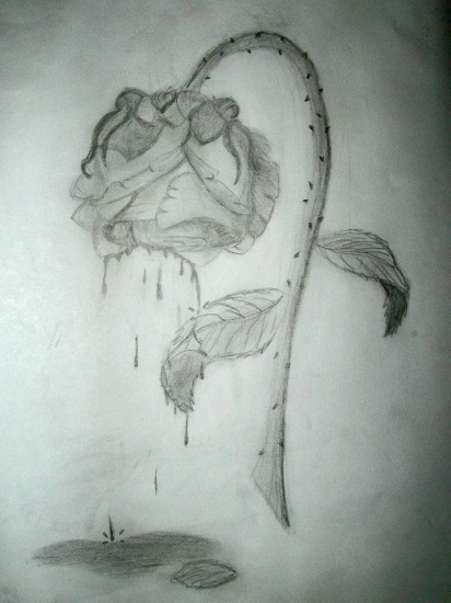 Drawn rose wilted All do Sketch Draw well