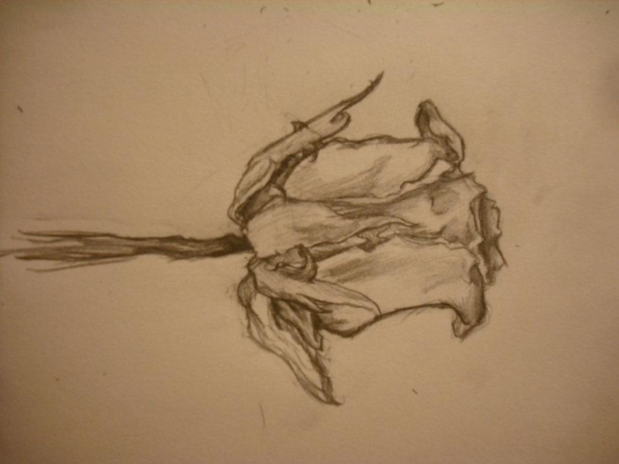 Drawn rose wilted Sparetime92 DeviantArt Summer17 Sparetime92 rose