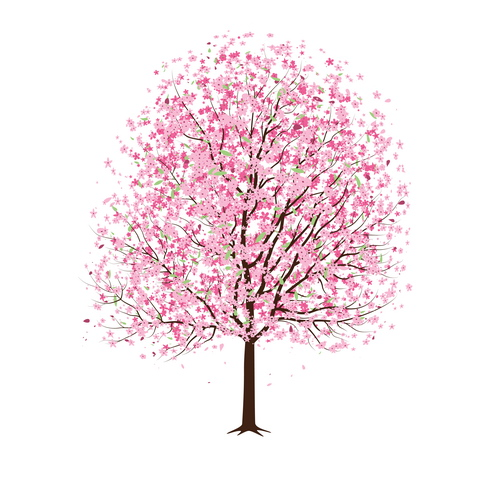 Drawn sakura blossom  cherry in Weeping look