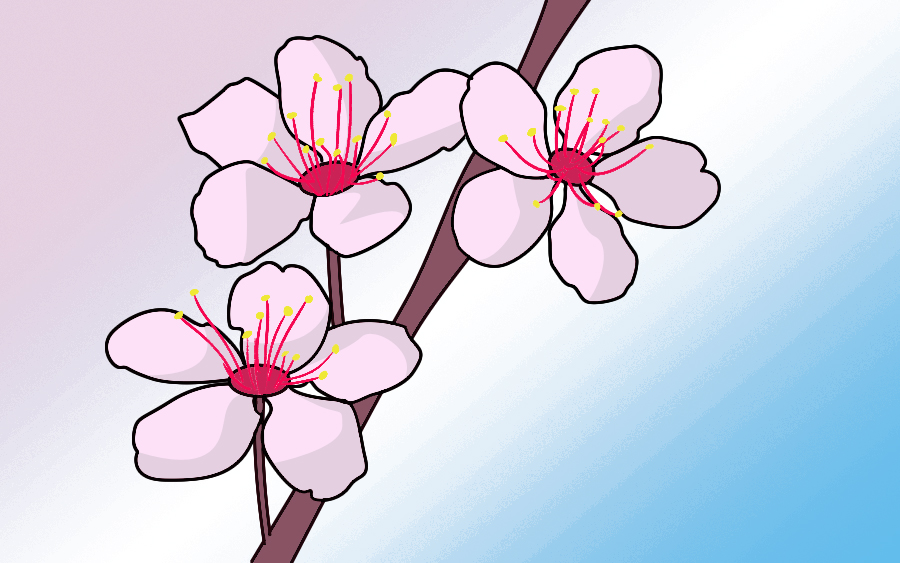 Drawn sakura blossom Cherry Blossoms Draw Draw To