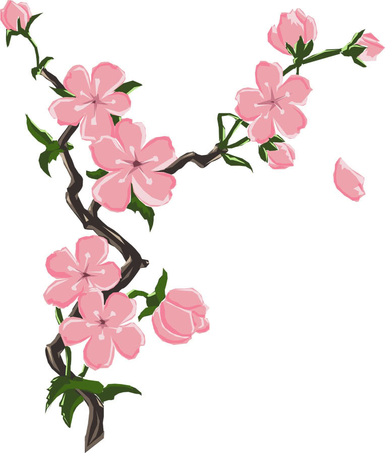 Drawn sakura blossom Cherry Pinterest  Blossoms Drawing