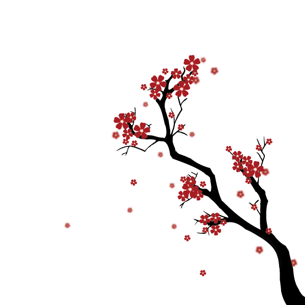 Drawn sakura blossom Japanese Cherry a Blossom Create