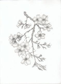 Drawn sakura blossom almond tree Cherry Blossom blossom silhouette Branch