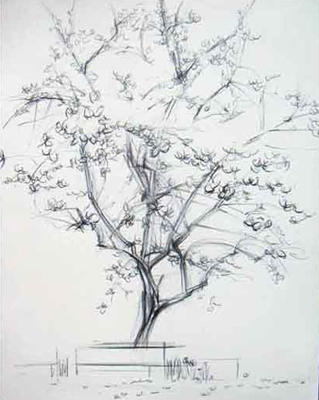 Drawn sakura blossom almond tree Drawing Cherry Tree Blossom Cherry