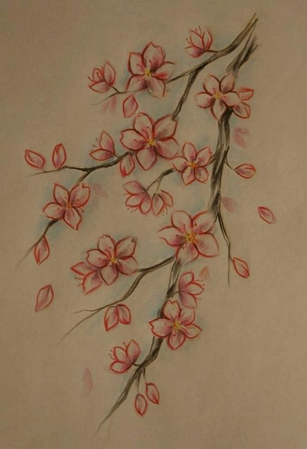Drawn sakura blossom almond tree By images Asian best blossom