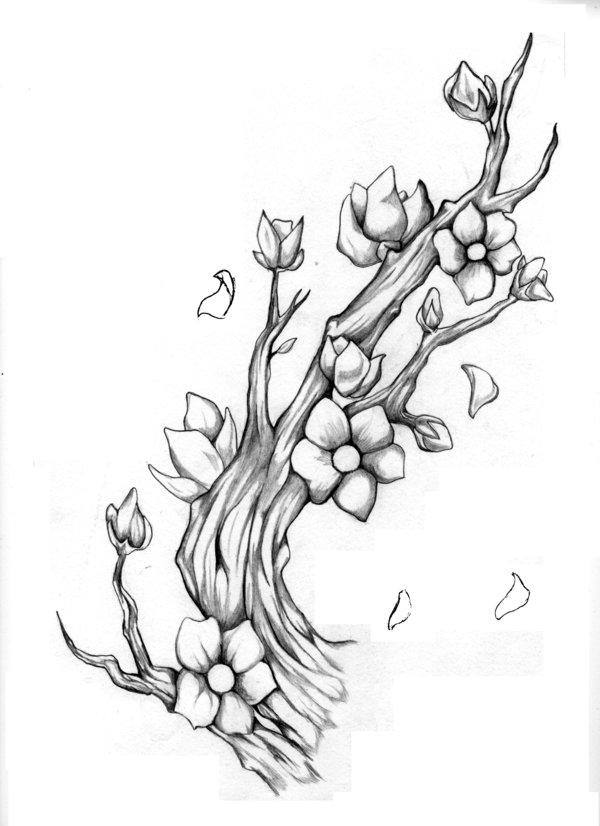 Drawn sakura blossom almond tree Tree by
