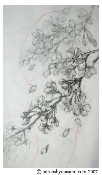 Drawn sakura blossom almond tree Images on and Blossom Realistic