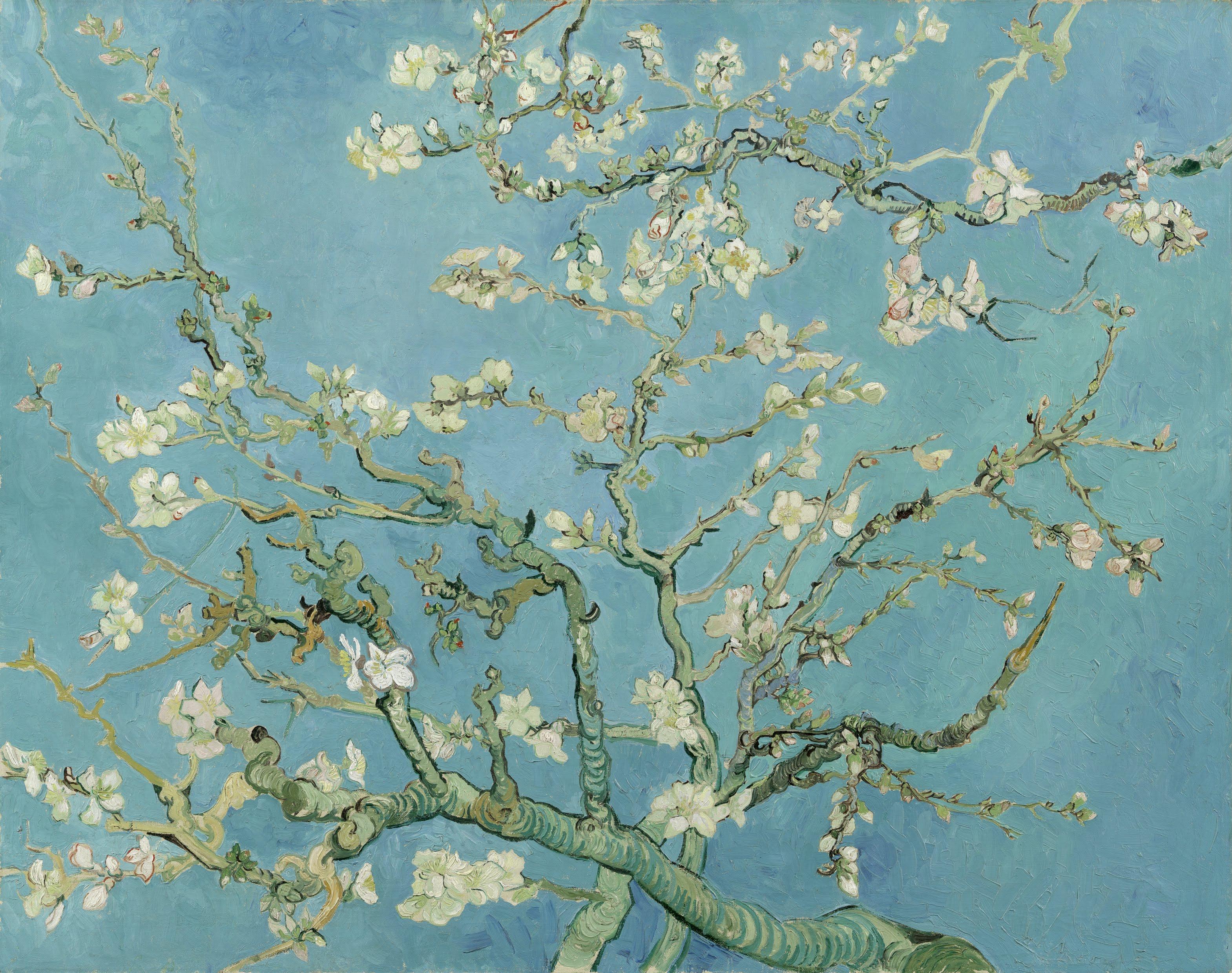 Drawn sakura blossom almond tree Almond Blossom Blossoms Wikipedia 1890