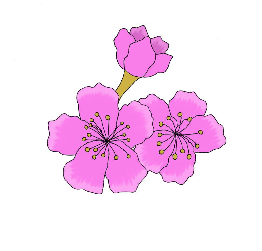 Drawn sakura blossom anime Blossoms anime Cherry anime ninja