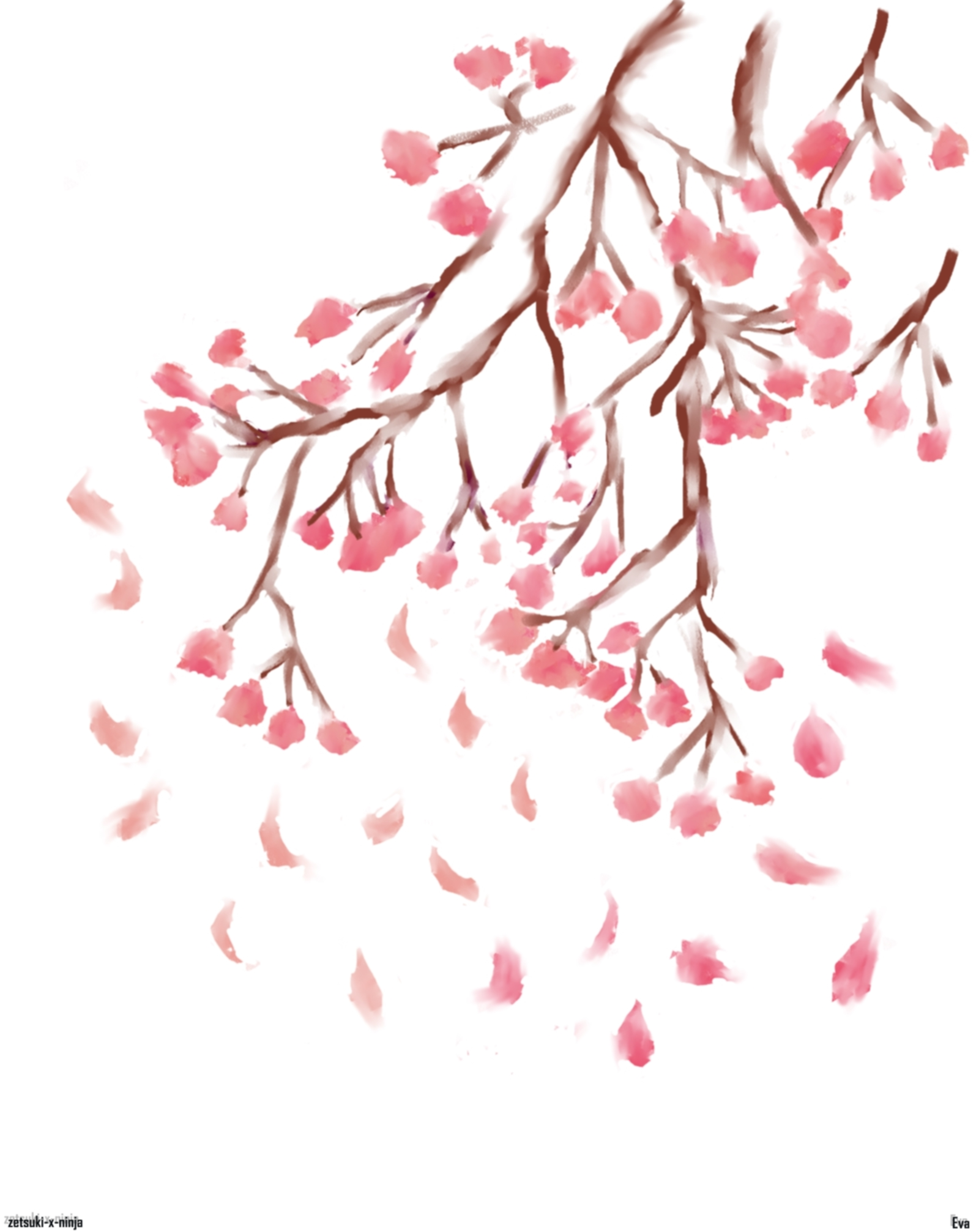 Drawn sakura blossom anime Ninja blossoms  2 2