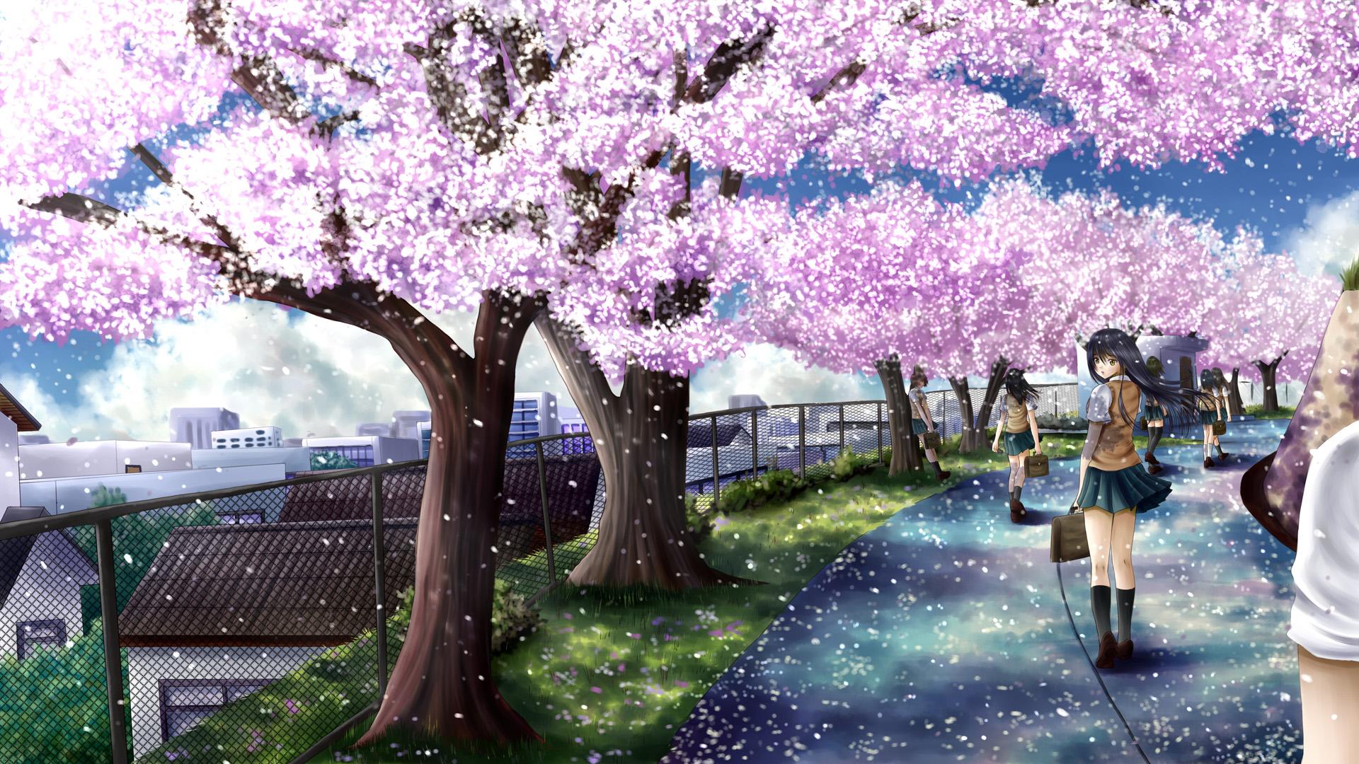 Drawn sakura blossom anime Blossoms seifuku cherry seifuku jpg