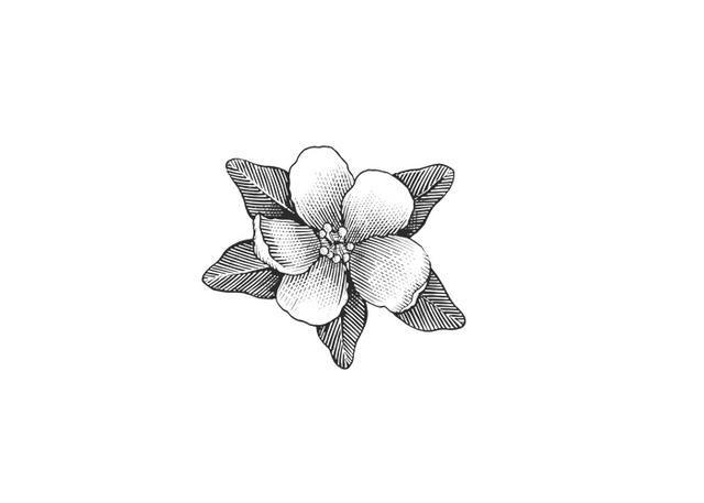 Drawn sakura blossom apple blossom Best 25+ apple on tattoos