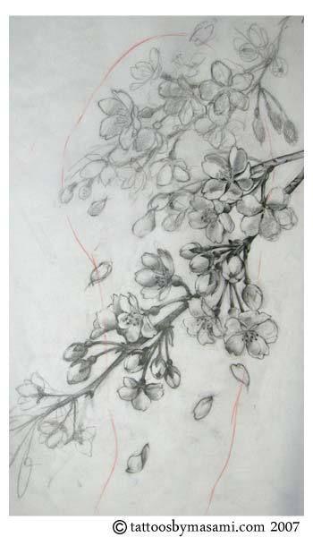 Drawn sakura blossom apple blossom Apple on 25+ white blossom