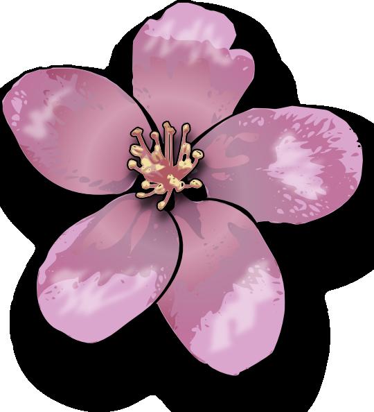 Drawn sakura blossom apple blossom Art Clip clip Free art