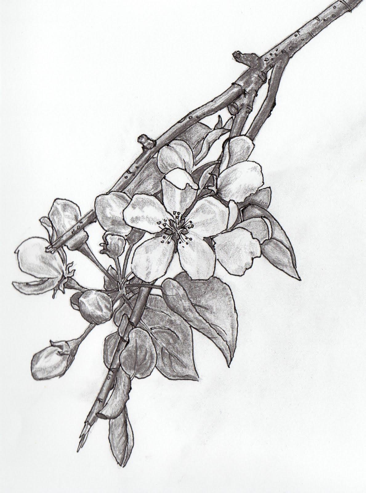 Drawn sakura blossom apple blossom Apple Blossom Elise heroes Apple