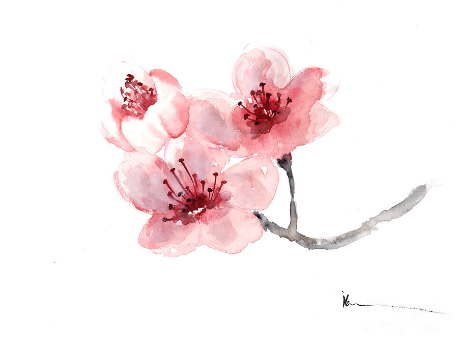 Drawn sakura blossom apricot blossom Cherries Cherry Cherry Tattoos Cherry