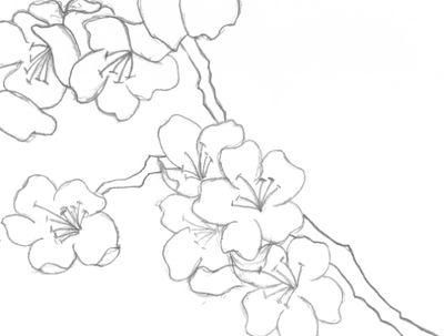 Drawn sakura blossom apricot blossom On images Ochna Weirdo Japanese
