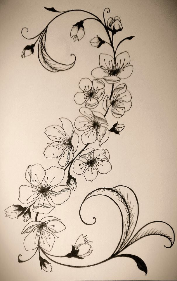Drawn sakura blossom apricot blossom Art Pinterest Cherry 20+ Up