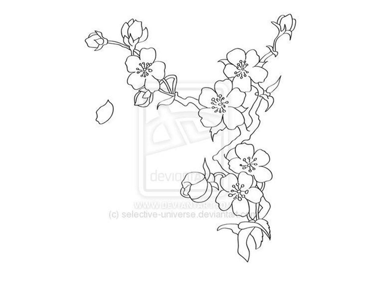 Drawn sakura blossom black and white Images Best Cherry Drawing Best
