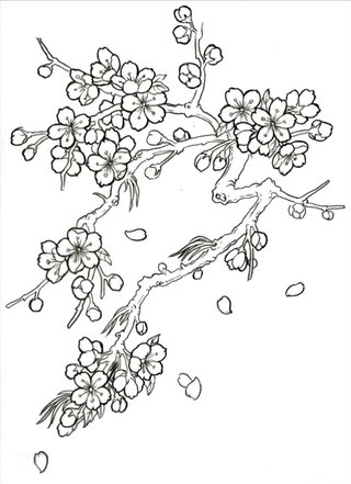 Drawn sakura blossom black and white More Drawing Find Tree and
