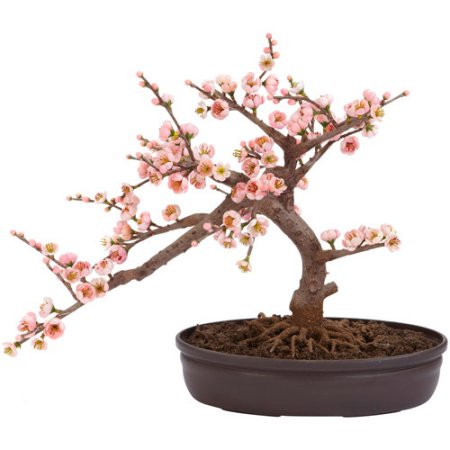 Drawn sakura blossom bonsai tree Tree Silk Blossom Tree Silk