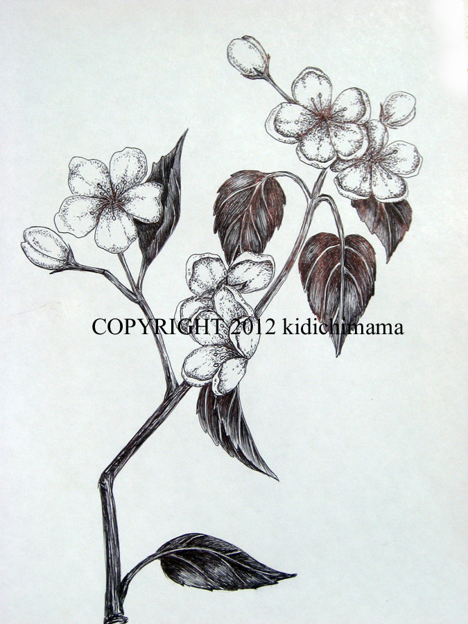 Drawn sakura blossom botanical Blossom stipple art fine flower