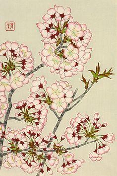 Drawn sakura blossom botanical ArtworkJapanese Kawarazaki Shodo ArtAsian PrintsBlock