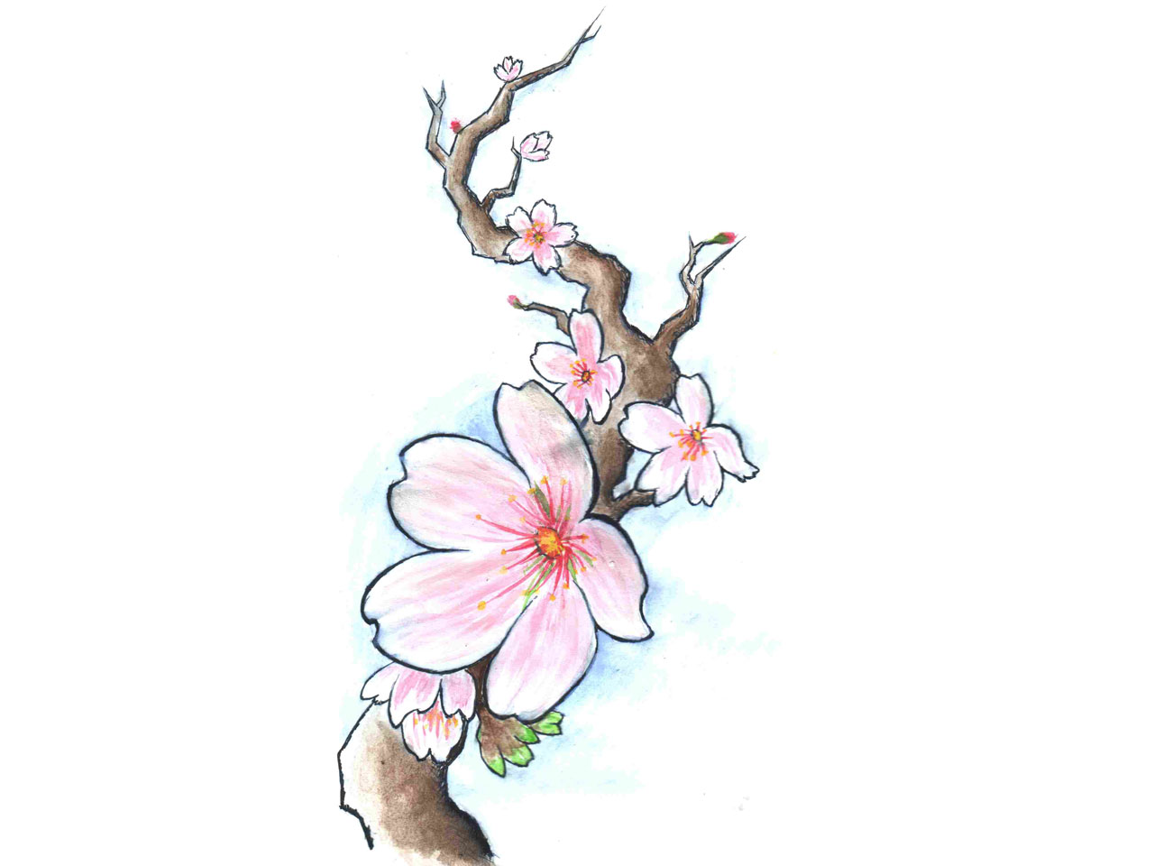 Drawn sakura blossom branch On cherry TattoosCherry (Obrazek JPEG
