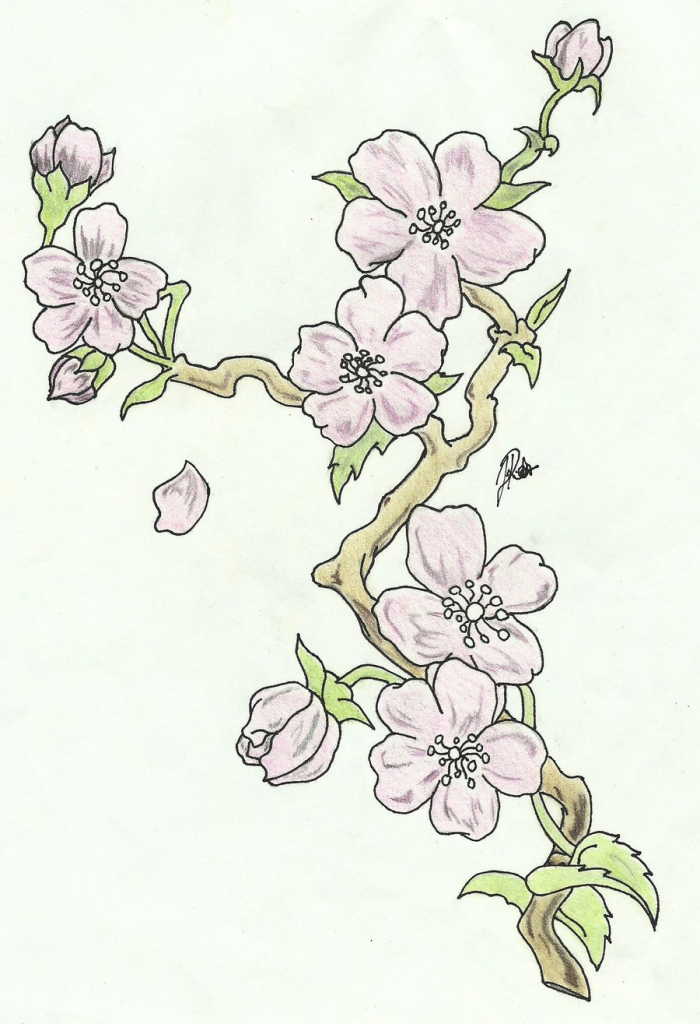 Drawn sakura blossom branch Drawing Of Blossom Branch